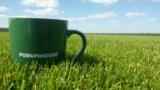 Рулонный газон. Фото 4.