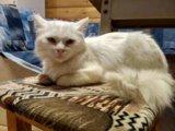 Кастрированный кот. Фото 1.
