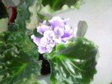 Цветы. Фото 2.