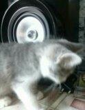 Отдаю кошку бесплатно. Фото 2.
