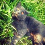 Вязка с ярким и интересным котом!. Фото 1.
