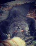 Вязка с ярким и интересным котом!. Фото 2.
