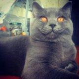 Вязка с ярким и интересным котом!. Фото 3.