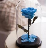 Роза в стеклянной колбе на подставке. Фото 1.