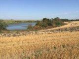 Участок, свыше 500 сот., сельхоз (снт или днп). Фото 2.