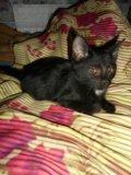 Отдам котят. Фото 3.