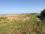 Участок, свыше 500 сот., сельхоз (снт или днп). Фото 4.