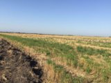 Участок, свыше 500 сот., сельхоз (снт или днп). Фото 1.