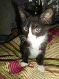 Отдам котят. Фото 2.