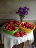 Овощи с грядки(калужская область). Фото 1.