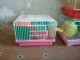 Клетки для джунгарских хомяков. Фото 1.