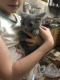 Кошечка. Фото 3.