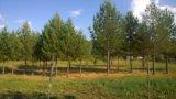 Участок, от 15 до 30 сот., сельхоз (снт или днп). Фото 17.