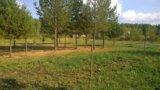 Участок, от 15 до 30 сот., сельхоз (снт или днп). Фото 16.