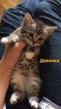 Очаровательные котята от домашней кошки. Фото 3.
