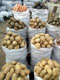 Картошка. Фото 1.