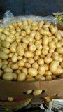 Картошка. Фото 3.