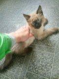 Котеня. Фото 2.