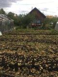 Участок, 4.5 сот., сельхоз (снт или днп). Фото 1.