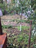 Участок, 4.5 сот., сельхоз (снт или днп). Фото 4.
