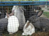 Кролики. Фото 4.