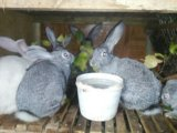 Кролики. Фото 3.
