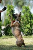 Дрессировка собак. Фото 1.