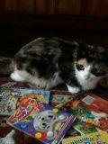 Кошечка даром. Фото 3.