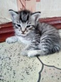 Котя. Фото 1.