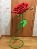 Интерьерная роза. Фото 4.