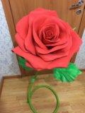 Интерьерная роза. Фото 3.
