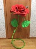Интерьерная роза. Фото 1.