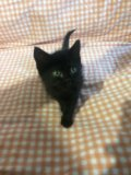 Котята 1,5 месяца. Фото 4.
