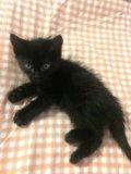 Котята 1,5 месяца. Фото 2.