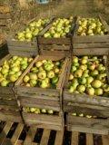 Яблоки грени смит. Фото 4.