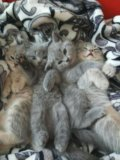 Котятки 🐈 котэйки. Фото 1.