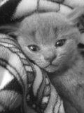 Котятки 🐈 котэйки. Фото 2.