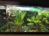 Аквариум 60л с рыбками. Фото 3.