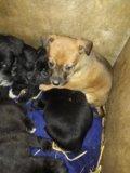 Отдам отличных щенят в свой дом. Фото 1.