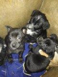Отдам отличных щенят в свой дом. Фото 3.