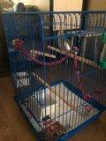 Попугай с клеткой. Фото 2.