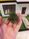 Деревья для макета (6, 5 см, код: d 04). Фото 2.