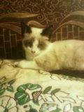 Кошечка. Фото 4.
