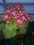 Цветы. Фото 1.