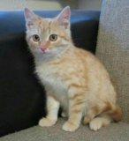 Чудесный ребенок-рыжий котенок. Фото 1.