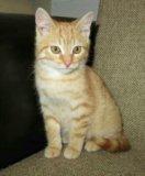 Чудесный ребенок-рыжий котенок. Фото 2.