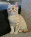 Чудесный ребенок-рыжий котенок. Фото 4.