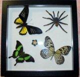 Бабочки в рамках. Фото 4.