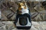 Рюкзак переноска для собак. Фото 1.