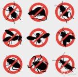 Уничтожение тараканов, клопов, блох и мышей